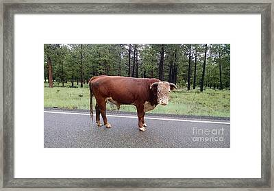 Framed Print featuring the photograph No Bull by Roberta Byram