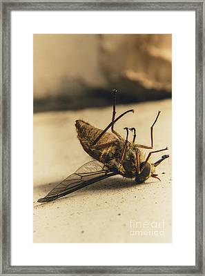 No Escape Framed Print by Jorgo Photography - Wall Art Gallery