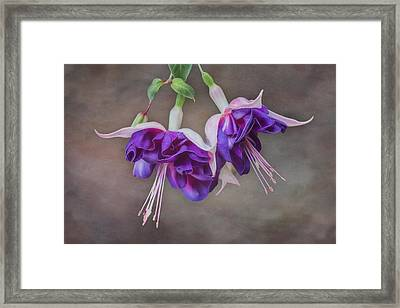 Purple Fuchsia Framed Print