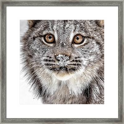 No Mouse This Time Framed Print