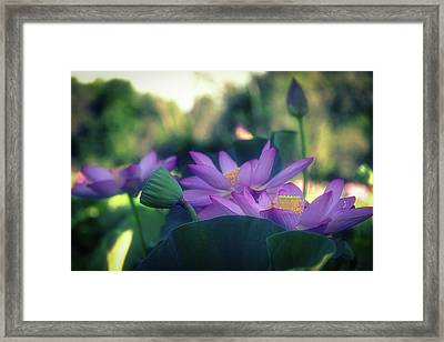 Framed Print featuring the photograph No Mud, No Lotus by Cindy Lark Hartman