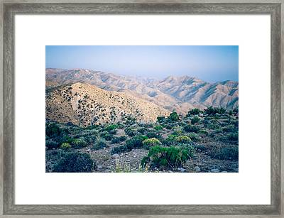 No Sign Of Life Framed Print