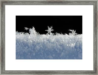 No Two Exactly Alike Framed Print