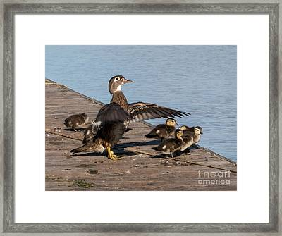 No We're Not There Yet Framed Print by As the Dinosaur Flies Photography