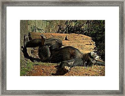 Framed Print featuring the photograph No Worries by Jessica Brawley