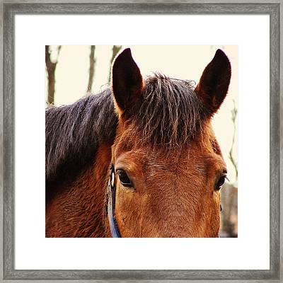 Noble Companion Framed Print by JAMART Photography