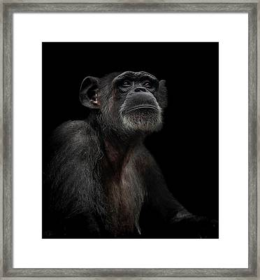 Noble Framed Print by Paul Neville