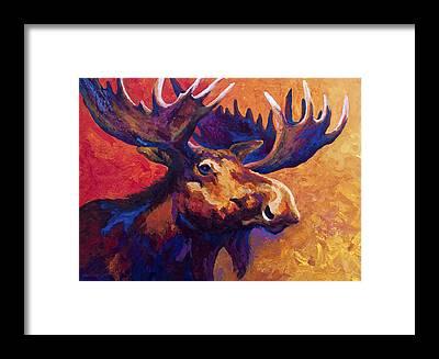 Moose Framed Prints