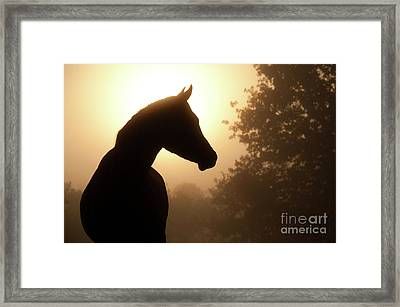 Noble Profile Framed Print