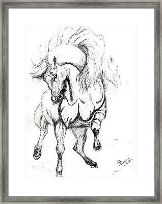Noble Stallion Framed Print by Kim Souza