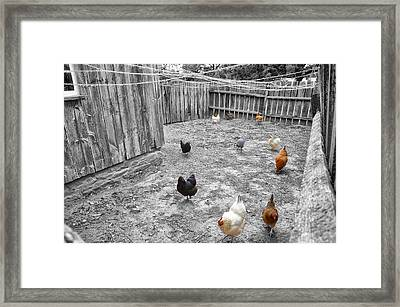Nobody Here But Us Chickens Framed Print by Bill Cannon
