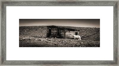 Nobody Home - Black And White Polar Bear Photograph Framed Print by Duane Miller