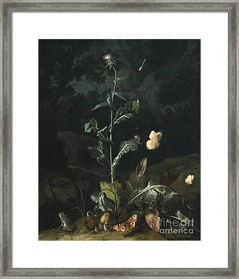 Nocturnal Forest Floor Still Life With A Thistle Framed Print by MotionAge Designs