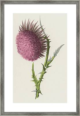 Nodding Thistle Framed Print