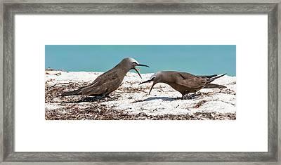 Noddy Behavior Framed Print by Dawn Currie