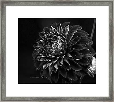 Noir Beauty Framed Print