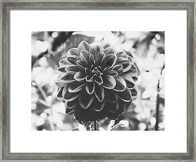 Noir Dahlia  Framed Print
