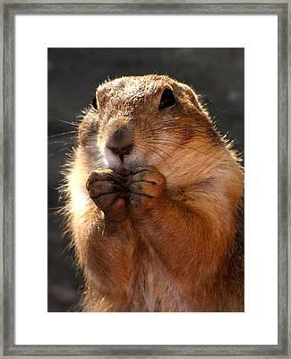 Snacking Prairie Dog Framed Print