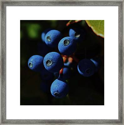 Noon Framed Print by Amy Neal