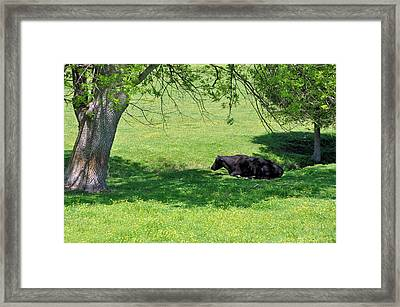 Noon Siesta Framed Print by Jan Amiss Photography