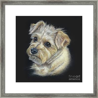 Framed Print featuring the drawing Norfolk Terrier 'hattie' by Donna Mulley