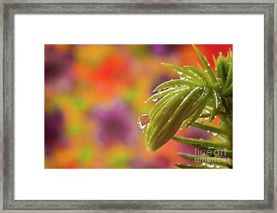 Framed Print featuring the photograph Norfolk Tree Branch by Christine Amstutz
