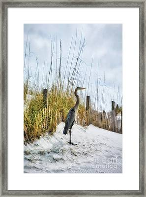 Framed Print featuring the photograph Norriego Point Heron by Mel Steinhauer