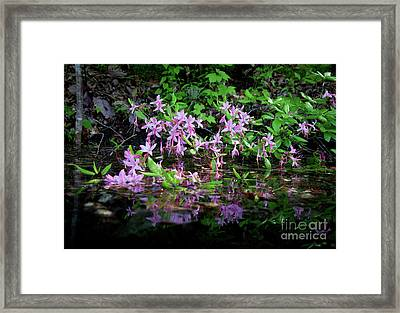 Norris Lake Floral 2 Framed Print by Douglas Stucky
