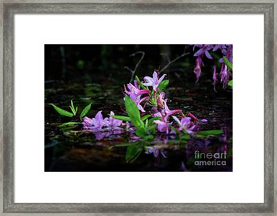 Norris Lake Floral Framed Print by Douglas Stucky