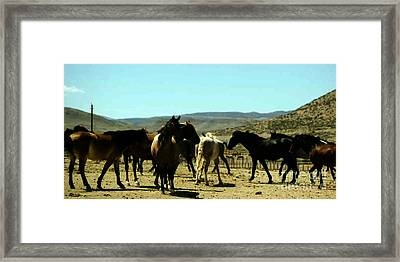 North American Mustangs Horses  Photography See On Posters Pillows Curtains Duvet Covers Tote Bags Framed Print by Navin Joshi