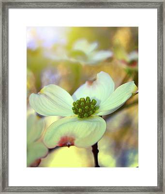 Framed Print featuring the painting North Carolina Dogwood State Flower by Gray  Artus