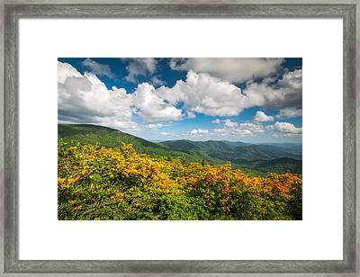 North Carolina Roan Mountain Flame Azalea Flowers Appalachian Trail Framed Print by Dave Allen