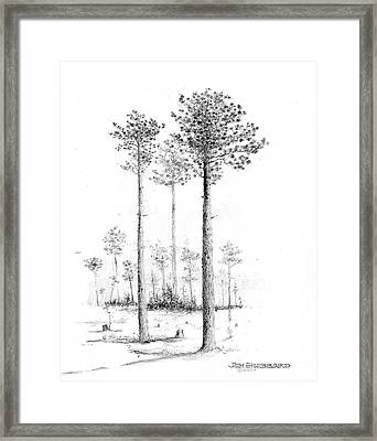 North Carolina- Southern Longleaf Pine Framed Print