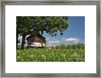 Framed Print featuring the photograph North Carolina Tobacco by Benanne Stiens