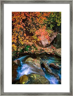 North Creek Fall Foliage Framed Print by Inge Johnsson