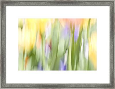 North Hills Tulips II Framed Print