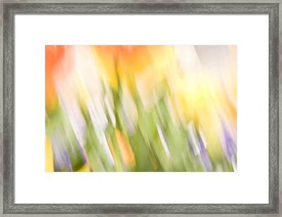 North Hills Tulips IIi Framed Print