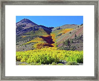 North Lake Aspen Stand Framed Print