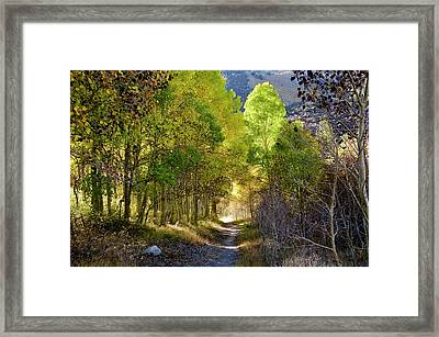 North Lake Aspens 2 Framed Print