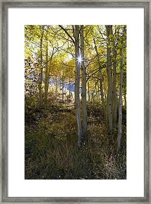 North Lake Aspens Framed Print