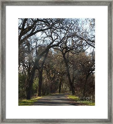 North Park Sunray Framed Print by Richard Verkuyl