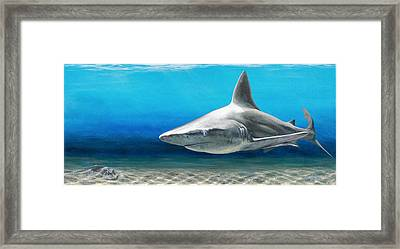 North Shore Sandbar Framed Print
