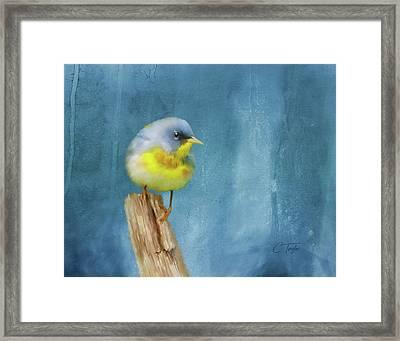 Northern Blue Song Bird Framed Print