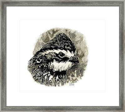 Northern Bobwhite Framed Print