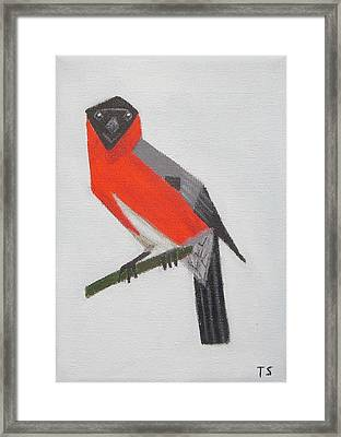 Northern Bullfinch Framed Print