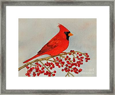Northern Cardinal Framed Print by Norma Appleton