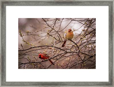 Framed Print featuring the photograph Northern Cardinal Pair In Spring by Terry DeLuco