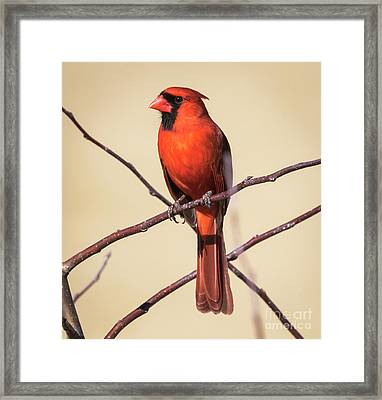 Framed Print featuring the photograph Northern Cardinal Profile by Ricky L Jones