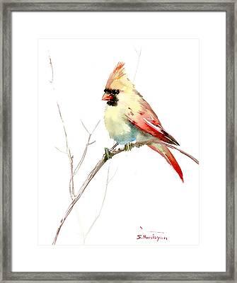 Northern Cardinal,female Framed Print