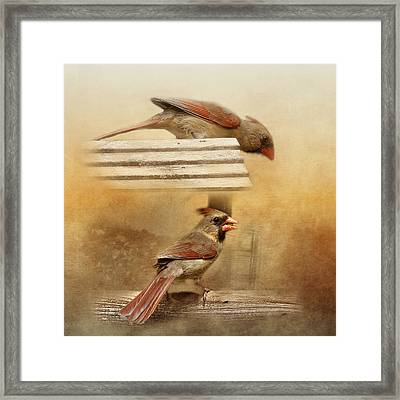 Northern Cardinals At Sunrise Framed Print
